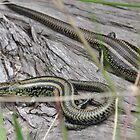Swamp Skinks. by TootgarookSwamp
