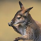 baby wallaby by KathleenRinker