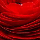 red by Erwin G. Kotzab