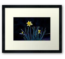 Lone Daffodil Framed Print