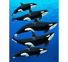 The Antibes Orcas Photographic Print