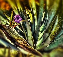 Nature Abstract by 242Digital