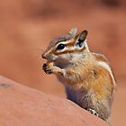 Cute Chipmonk for your i-phone! by Brian D. Campbell