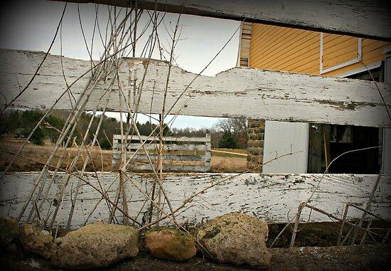 rural life by Lynne Prestebak