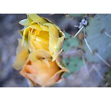 Prickly Pear Flowers Photographic Print