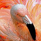 Flamingo by venny