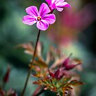 Little pink flowers by Jérôme Le Dorze