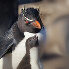 Rockhopper Penguin and Chick, Falkland Islands by Geoffrey Higges