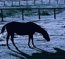 Horse Shadow by Nazareth