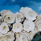 shells by juliaweston