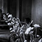 Temple Flowers - Angkor Wat by Jane  Earle Photography