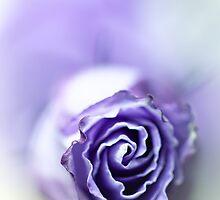 Purple breeze....(soft 1) by Bob Daalder