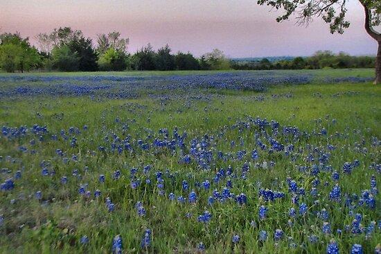 A Field of Bluebonnets - Texas by aprilann