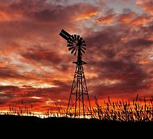 Windmill by Kylie Mckay