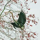 Heron Landing  © by Mary Campbell