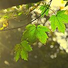 Autumn Allure by Nicoletté Thain Photography