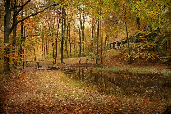 Autumn At Voorhees by Pat Abbott