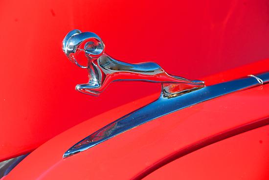 Red Ram by barkeypf