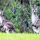Roos in Twos by George Petrovsky