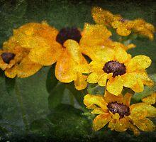 Sunflowers by Ginger  Barritt