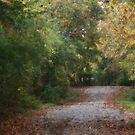 Covered Country Road by Ginger  Barritt