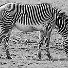 Black and White Stripes by Designer023