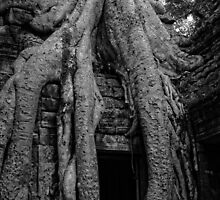 Ta Prohm by mlphoto