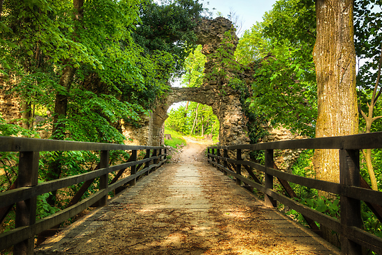 Wooden bridge through the green forest by Mario Cehulic