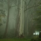Mistical - Mount Wilson, NSW Australia by Philip Johnson