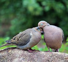 Two Turtle Doves by Cynthia48