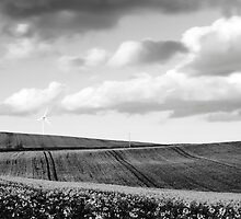 Countryside by Dave Ward