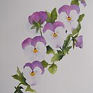 Pansies by Val Spayne