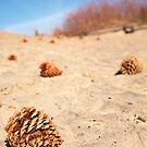 Pine cones on the sandy beach by Jess Gibbs