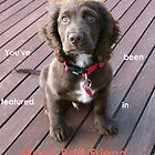 Man&#x27;s Best Friend Banner by DEB CAMERON
