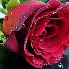 845-red rose by elvira1