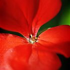 Little Red Flower by Kate Caston