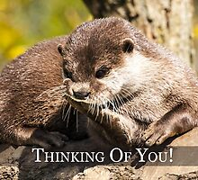 Thinking About You Greeting Card With Otter by Moonlake