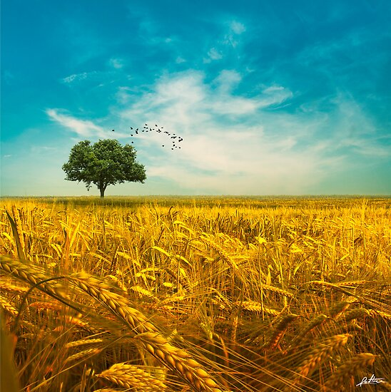 Lovely Day by redtree