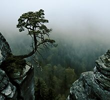 tree surrounded with rocks by Andreas Schott