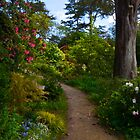 In the Rhododendron Garden by Barbara  Brown