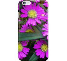 Fuchsia Daisy Flowers iPhone Case/Skin