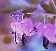 Lavender Love by aprilann