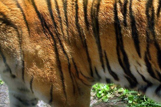 Tiger, Tiger Burning Bright  by John  Kapusta