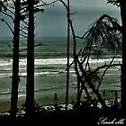 Ruby Beach through tall trees by Sarah Ella Jonason