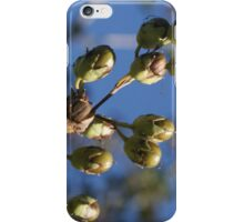 acorns iPhone Case/Skin