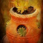 Terracotta Pot by Ginger  Barritt