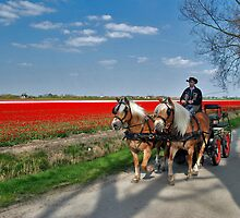 A ride along the tulips by Adri  Padmos