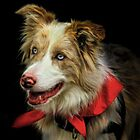 Red Merle Border Collie by Angelgold Art