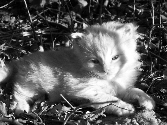 Peanut in the Sun by erinv2000