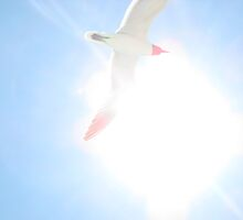 Seagull In Flight by Ginger  Hamilton
